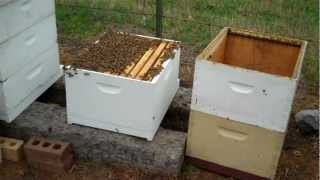 New Beekeeper - What to do now