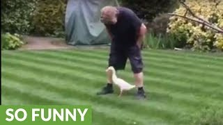 """Duck appears from nowhere, wants to """"dance"""" with human"""