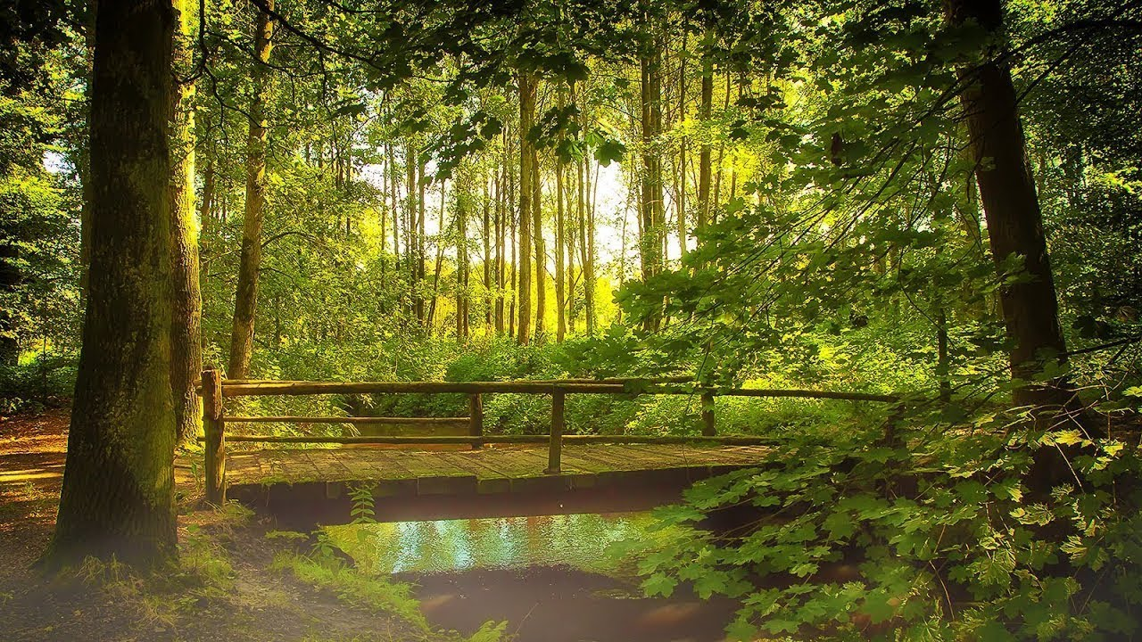 Sonidos De La Naturaleza Bosque Relajaci 243 N Meditaci 243 N