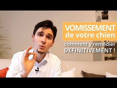 Mon Chien Vomit Jaune De La Bile, Voici Comment L'aider En 3 POINTS !