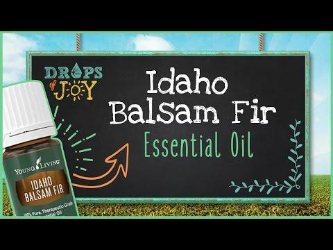 balsam-fir-essential-oil