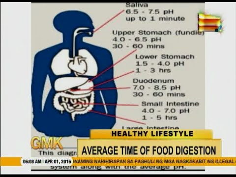 How Long Does Food Stay In Your Stomach After Eating