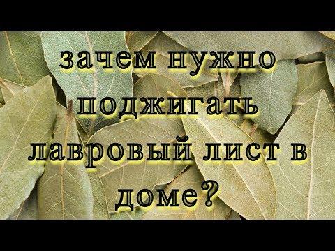 Узнайте зачем поджигать ЛАВРОВЫЙ ЛИСТ в доме#DomSovetov