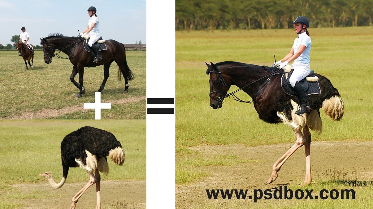 Photoshop images to combine how in