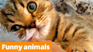 Cute Silly Animals | Funny Pet Videos