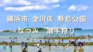 天気も良いので横浜の野島公園へ潮干狩りに行って来ました。 午後からで...