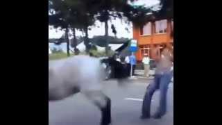 Repeat youtube video Horse kick - Angry animal
