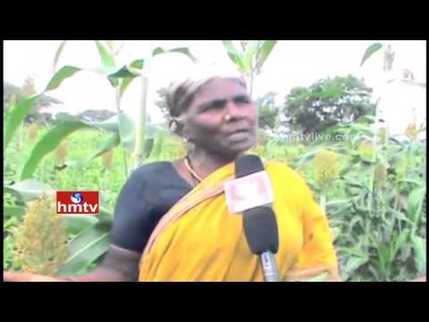 Nela Talli | Sugarcane Cultivation New Seed | Sustainable agriculture in China | HMTV