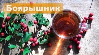 ☘ Боярышник | Свойства и применение | Чай из боярышника