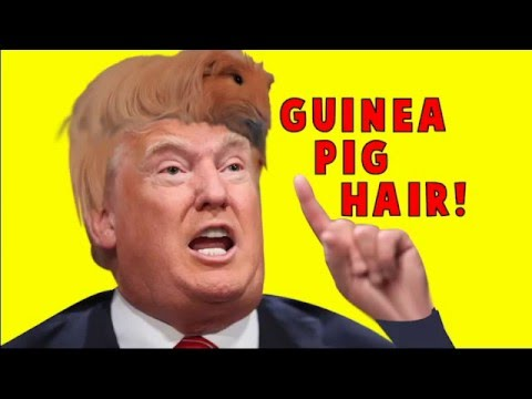 how to draw a pig donald trump