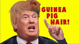 Donald Trump's Hair is a GUINEA PIG!