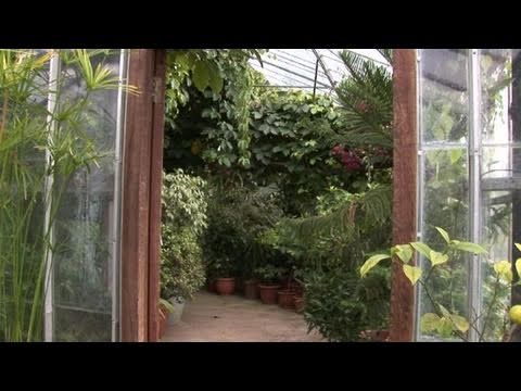 How To Create Your Own Tropical Glass House Youtube