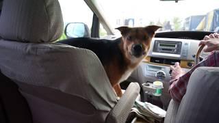 7月4日 7月3日より厚岸町乙幌の小師牧場の辺りに迷い犬がいると連絡があ...