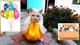 КОТ ИДЕТ в МАГАЗИН * Смешные Коты и Кошки Fanny cats