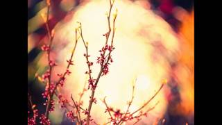 Mantsevich Dzenis - Fuchsia
