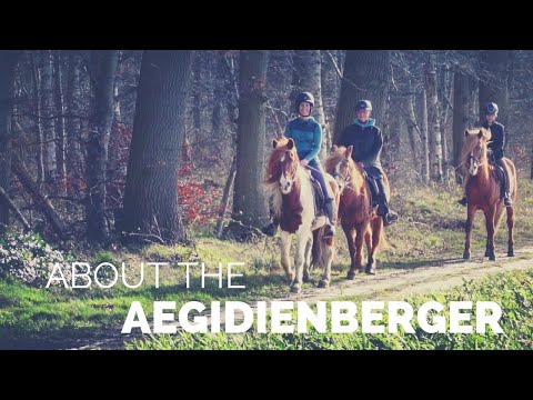 About the Aegidienberger | Gaited Horse Breed from Germany |