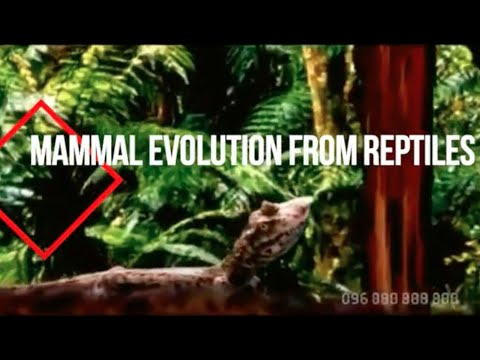 Mammal Evolution From Reptiles