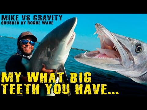 Thumbnail: SHARK vs BARRACUDA! + Tarpon Gets Detroyed