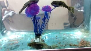 аквариумные сомики, любят декоративные растения, даже искусственные с Алиэкспресс :)