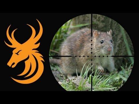 Airgun Hunting: Night vision rat shooting with the Pulsar ...
