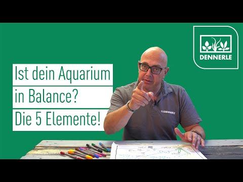Ist dein Aquarium in Balance? | Die 5 Elemente | DENNERLE