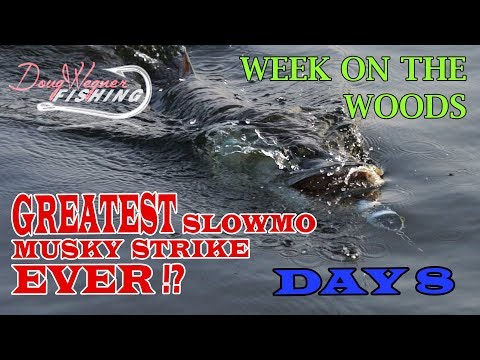 GREATEST SLOWMO MUSKY STRIKE EVER!? Day 8 WEEK ON THE WOODS