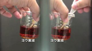 ヨウ素液で種子の中を調べる動画の3D版です。