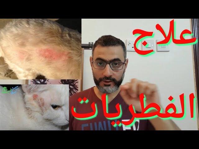 علاج الفطريات عند القطط والأدوية المطلوبة لعلاجها دون الذهاب للطبيب Youtube