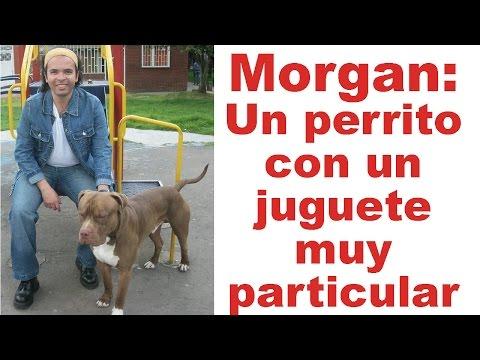 Morgan: Un perrito con un juguete muy particular | Tu Mascota TV