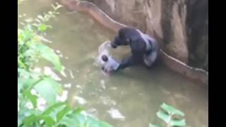 Download lagu FULL VIDEO: Boy falls into Gorilla World exhibit at Cincinnati Zoo (RIP Harambe)