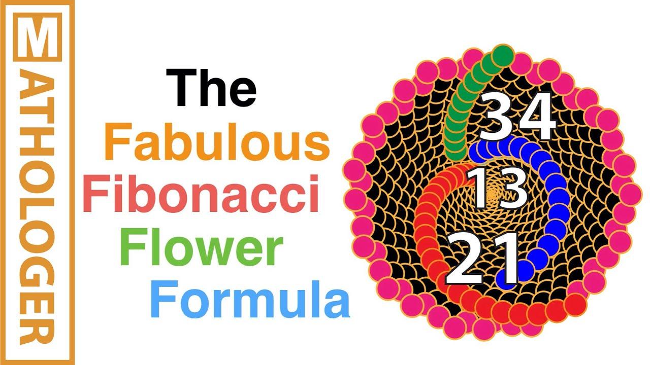 the fabulous fibonacci flower formula youtube