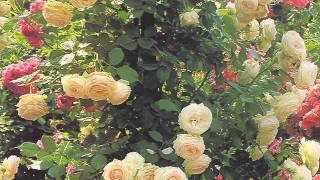 David Daniels - Serenade · Gounod