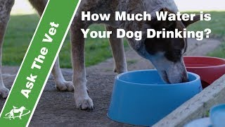 How much water is your dog drinking?- Companion Animal Vets
