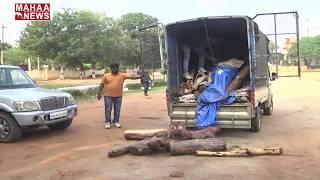 Red Sandalwood Smugglers In Kadapa Under The Surveillance Police Force  | MAHAA NEWS