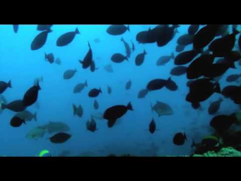 Spearfishing One Fish Mozambique