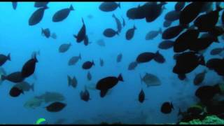 Download Video Spearfishing One Fish Mozambique MP3 3GP MP4