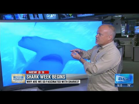 Why are we so fascinated by sharks?