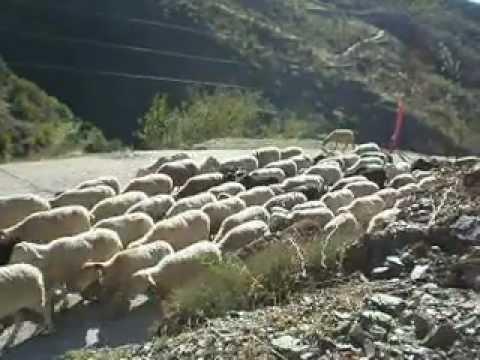 Goats + sheep bells beautiful sound from Casa Ana