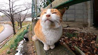 塀の上にいた野良猫を撫でるとゴロゴロと喉を鳴らして喜んでカワイイ