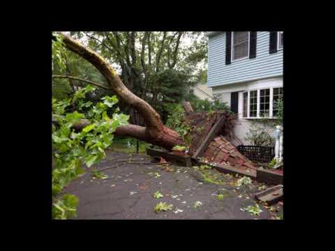 Fallen Tree Branch Removal in Omaha NE | Omaha Junk Disposal (402) 590-8092