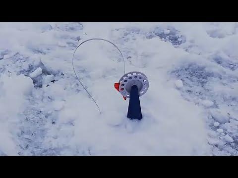 Зимняя рыбалка на жерлицы. Такую рыбу я не ожидал поймать
