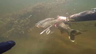 менее, подводная охота на сазана ночью летом источников тепла она