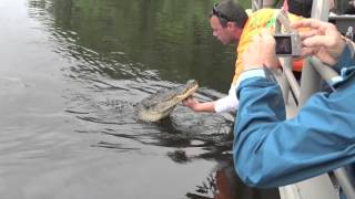 Feeding New Orleans Gators Marshmallows