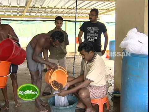 Success Story Of Sivajnanam : A Young Farmer With Multi Cultural Activities