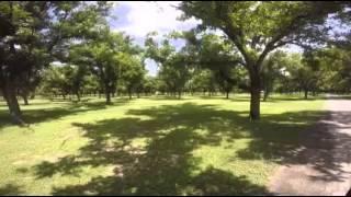 Pecan Farm