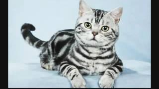 Информация о Африканских котах и кошках