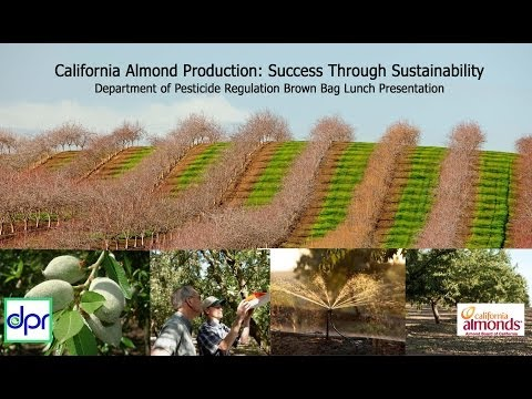 """California Almond Production: Success Through Sustainability"""