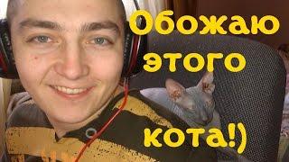 Донской Сфинкс Жорик! Игривый котенок.  Домашний архив.[#Донской сфинкс]