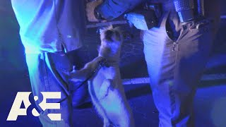 Live PD: Poor Poopy Head (Season 4) | A&E