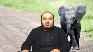 Rüyada fil görmek, Rüyada fil görmek ne anlama gelir, Rüya tabirleri, Rüya yorumu, Rüya tabiri
